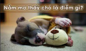 Ý nghĩa khi nằm mơ thấy chó là gì? Nên đánh số mấy trúng lớn?