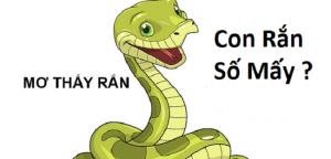 Nằm mơ thấy rắn là điềm gì? Nên đánh con lô bao nhiêu khi nằm mơ thấy rắn?